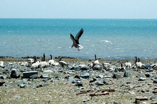 近日,青海省青海湖景区保护利用管理局委托某采购代理机构,就青海湖